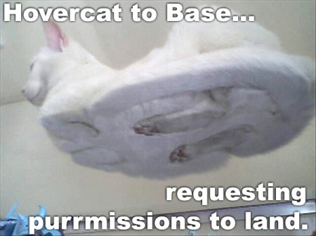 Hovercat to Base